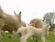 Chăn nuôi thời 4.0: học kỹ thuật trên Youtube, lướt ứng dụng cập nhật thị trường