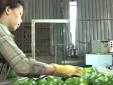 Tăng năng suất và cải thiệt chất lượng là bài giải cho nền nông nghiệp phát triển