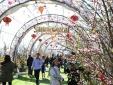 Mê mẩn với sắc xuân Tây Bắc trong Hội Xuân Mở Cổng trời Fansipan