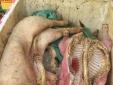 Tiêu hủy 600kg thịt heo chết bốc mùi hôi thối