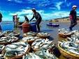 Khắc phục 'thẻ vàng' thủy sản: Cần sự vào cuộc của các địa phương
