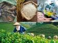Tham gia các hiệp định thương mại tự do- Nông sản Việt thêm cơ hội xuất khẩu