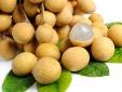 Nhãn tươi Việt Nam có cơ hội vào thị trường Úc