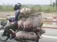 Nghiêm cấm vận chuyển lợn, thịt lợn trái phép ra, vào Việt Nam