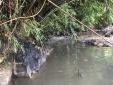Vụ nước sạch sông Đà nhiễm bẩn: Chính thức khởi tố vụ án