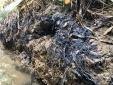 Vụ nhà máy nước Sông Đà có chất Styren từ dầu thải: Chuyên gia khuyến cáo gì?