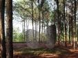 Triển lãm Art in the Forest 2019: Hành trình 5 năm gieo mầm nghệ thuật