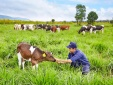 Vinamilk bác bỏ tin đồn không đúng sự thật về nguồn nguyên liệu để sản xuất sữa