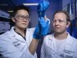 Chế tạo thành công loại vật liệu mới có thể co giãn như cơ bắp và tự chữa lành như da
