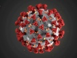 Các chuyên gia đưa ra dự đoán mới về Virus Corona chủng mới