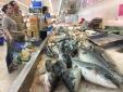Hà Nội mong người dân tiêu thụ hải sản giúp doanh nghiệp