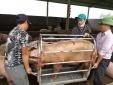 Bộ trưởng Nông nghiệp lý giải nguyên nhân giá thịt lợn vẫn ở mức cao