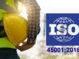 Triển khai thành công ISO 45001:2018 cho doanh nghiệp Việt Nam