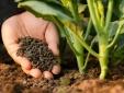 Bộ Nông nghiệp chi 20 tỷ đồng xây dựng TCVN, QCVN phục vụ quản lý nhà nước của ngành