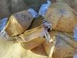 Philippines sản xuất khẩu trang làm từ cây chuối sợi giúp giảm rác thải nhựa
