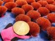 Cảnh báo hiện tượng nhập lậu hương nhang vào thị trường Ấn Độ