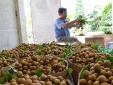 Doanh nghiệp tìm kiếm nhãn chất lượng cao để xuất khẩu