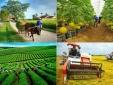 Ngành Nông nghiệp và định hướng tăng trưởng gắn với chất lượng