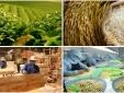 Nông nghiệp đẩy mạnh phát triển sản xuất hàng hóa theo thế mạnh từng vùng