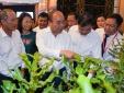 'Mắc ca Việt Nam có thể đứng đầu thế giới'