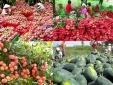 Rau quả Việt Nam tiến vào EU: Cần sản xuất theo hướng an toàn