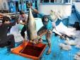 Gỡ thẻ vàng cho thủy sản: Sẽ tăng mức xử phạt vi phạm ngang bằng tiêu chuẩn EC
