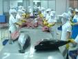 Trung Quốc siết chặt quản lý nhập khẩu- Bộ Công Thương lưu ý doanh nghiệp xuất khẩu nông thủy sản