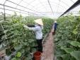 Khoa học công nghệ - giải pháp đột phá giúp nông nghiệp nâng cao NSCL