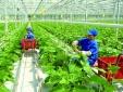 Phát triển nông nghiệp hữu cơ phải gắn với tiêu chuẩn chất lượng