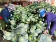 Tháo gỡ khó khăn lưu thông hàng hóa, thúc đẩy tiêu thụ nông sản do ảnh hưởng của dịch COVID-19