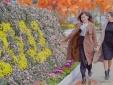 Xuân Sa Pa đẹp rạng ngời, hút hàng nghìn lượt khách check-in