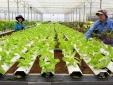 Tìm lối ra bền vững cho nông sản sạch