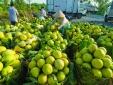Ảnh hưởng dịch bệnh, nhiều nông sản Sóc Trăng cần được hỗ trợ tiêu thụ