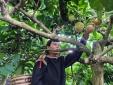 Hợp tác, kết nối nâng cao thương hiệu nông sản Tây Nguyên