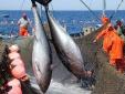 Yếu tố nào để ngành thủy sản đáp ứng quy tắc xuất xứ tại EVFTA