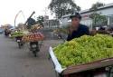 Nho không hạt, ngọt lịm giá 25.000 đồng tràn lan ở Hà Nội