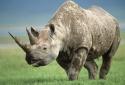 Liên tiếp các vụ thú rừng tấn công người đến chết ở khu du lịch