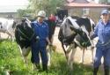 Đủ 'chiêu' luyện thi hoa hậu… bò sữa
