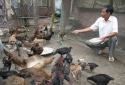 Cảnh báo chăn nuôi dùng thuốc tân dược