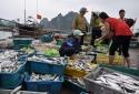 Công khai 3 đường dây nóng thu mua thủy sản của ngư dân miền Trung