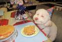 Phản ứng ngộ nghĩnh của thú cưng khi được tặng quà sinh nhật