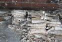 Phát hiện gần 1 tấn nghi ngà voi trị giá khoảng 40 tỷ đồng trong 2 container