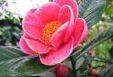 Trưng hoa gì để tươi lâu, mang lại giàu sang - phú quý - tài lộc trong ngày Tết?