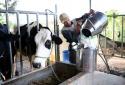 Huyện Ba Vì nói gì về vụ việc 'nông dân 'chết đứng' vì bò sữa'?