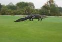 Cá sấu khổng lồ 'to như khủng long' ở Florida