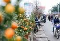 5 chợ hoa nổi tiếng Hà Nội nên ghé thăm trong dịp Tết
