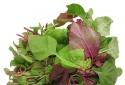 Cân nhắc kỹ trước khi ăn 4 loại rau xanh quen thuộc hàng ngày