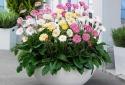 Năm mới hãy trồng cây phong thủy giúp mang tài lộc về nhà