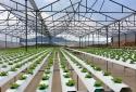 50% doanh nghiệp Việt Nam ứng dụng công nghệ xanh