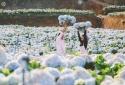 Check-in ngay vườn hoa cẩm tú cầu đang gây sốt ở Đà Lạt